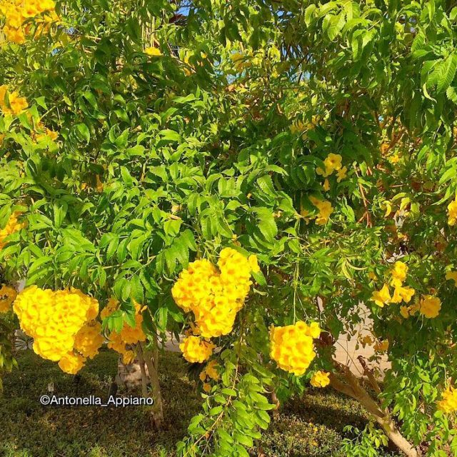 Justflowersbut what wonderful colours! al Sifah Sultanate of Oman